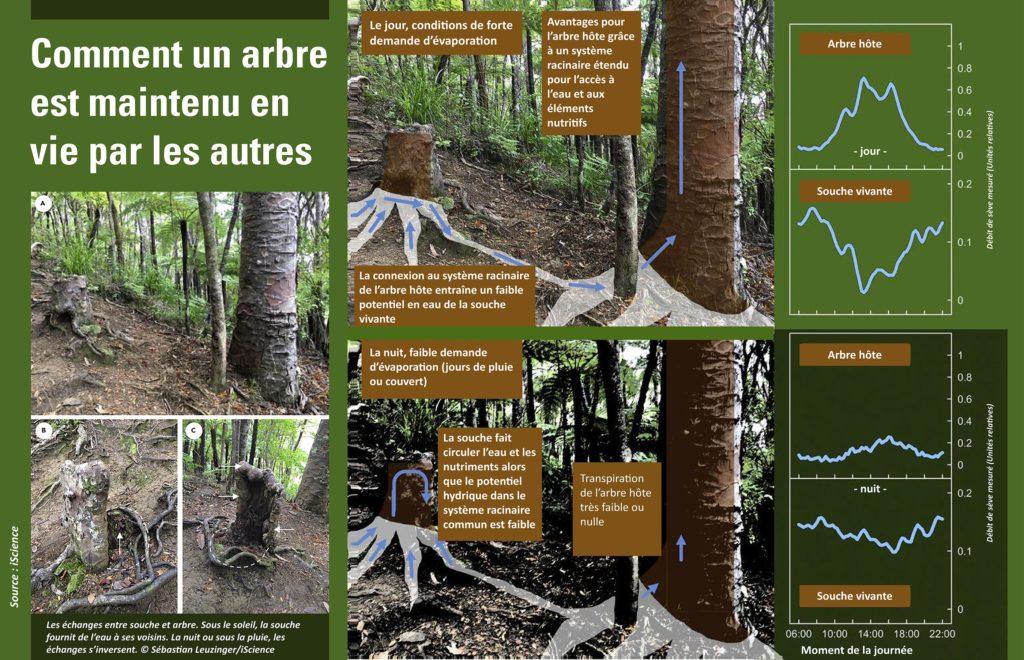 La science démontre que les arbres sont reliés entre eux