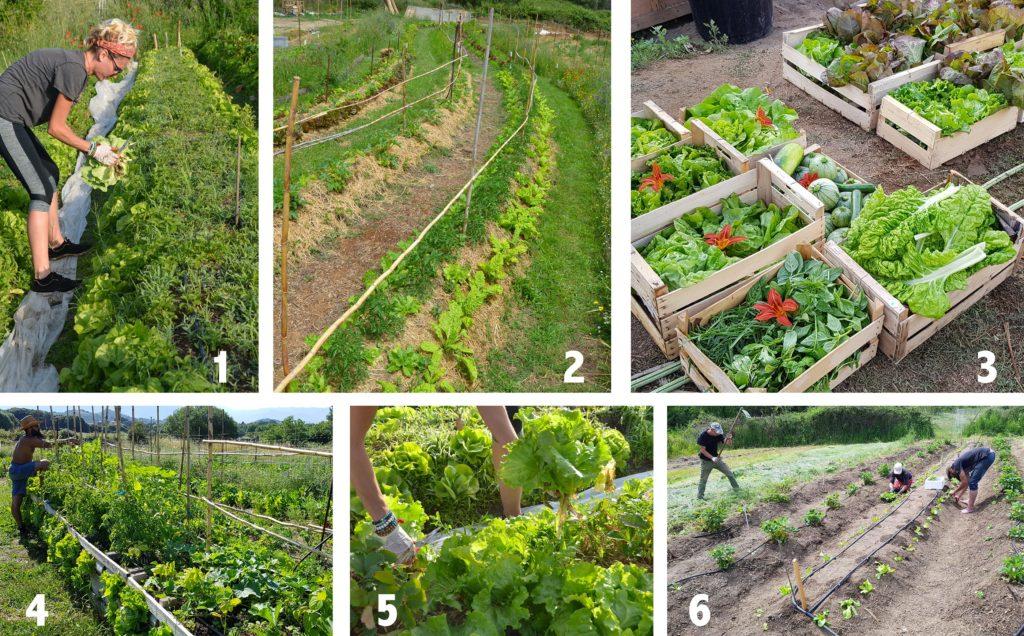 En route pour l'autonomie alimentaire : on se prépare (2)