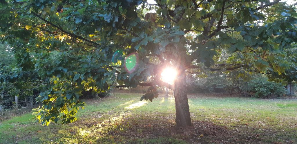 Permathérapie : L'écologie dans nos vies